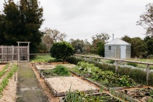 Mount Sturgeon Vegetable Garden