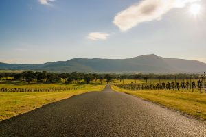 western Victoria's best wineries